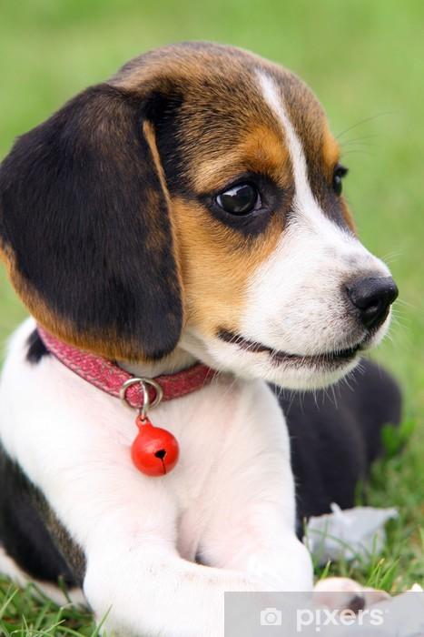 Vinyl Fotobehang Beagle 1 - Zoogdieren