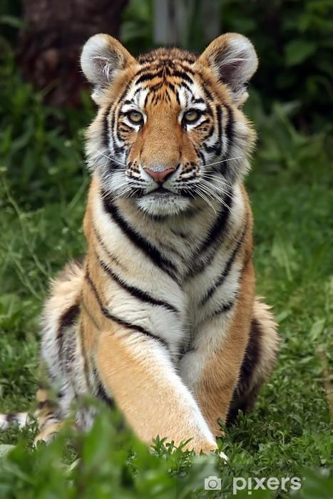 Sticker Pixerstick Amur Tiger Cub - Mammifères