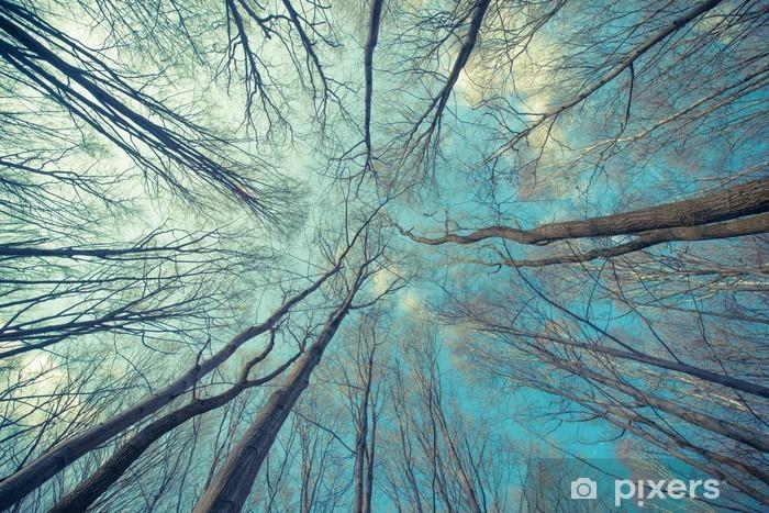 Fototapeta winylowa Drzewa Web Tło - Jesien