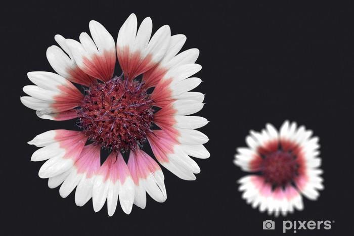 fleur détouré Vinyl Wall Mural - Flowers