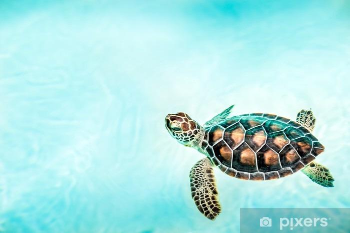 Papier peint vinyle Close up de tortue mignonne - Animaux