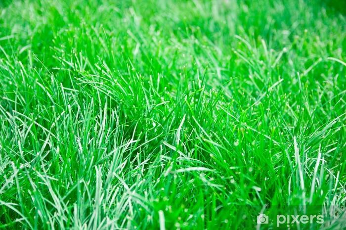Carta Da Parati Sfondo Verde Erba Pixers Viviamo Per Il Cambiamento