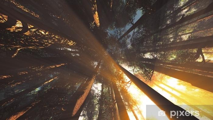 Vinyl Fotobehang Mystieke fantasiewouden verlicht lage hoek - Milieu