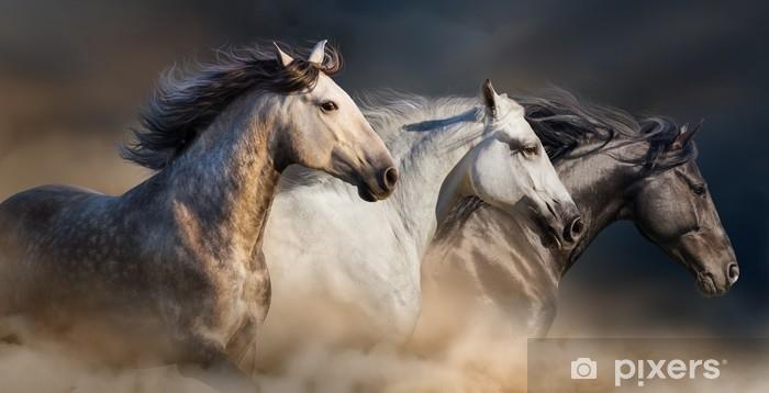 Fototapeta zmywalna Konie z długim grzywą portret uruchomić galop w pył pustyni - Zwierzęta