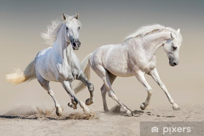 Vinyl Fotobehang Twee witte paardenrennen - Dieren