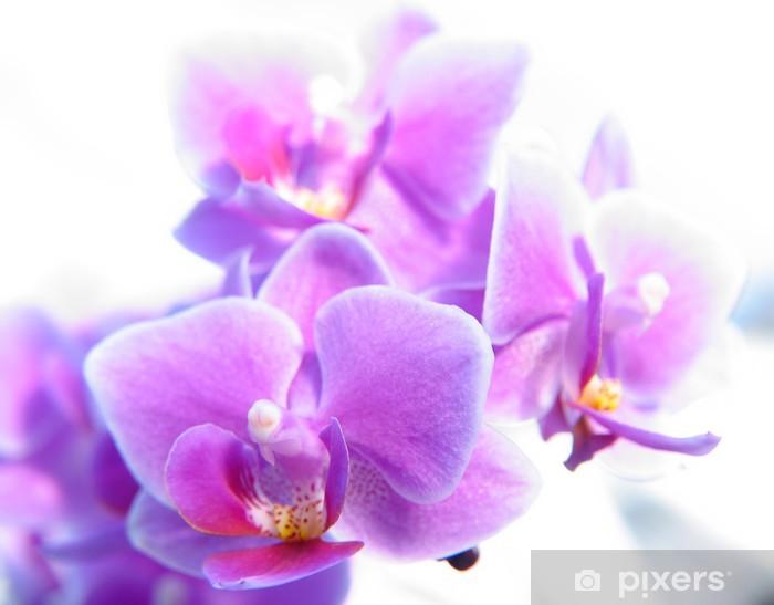 Sticker Pixerstick Phalaenopsis - Thèmes