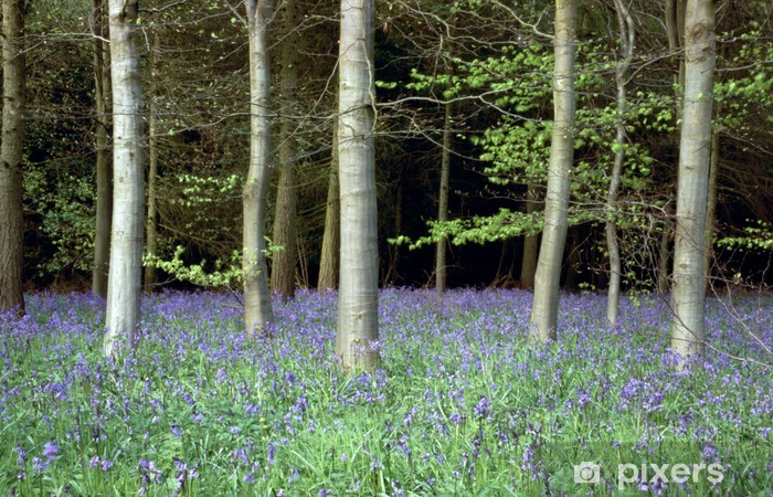 bluebell wood Wardrobe Sticker - Outdoor Sports