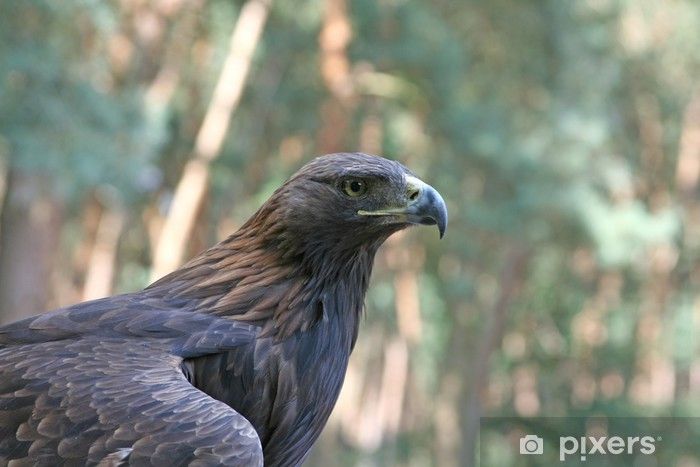 Papier peint vinyle Golden Eagle - Oiseaux