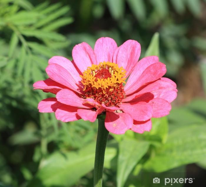 Fototapeta winylowa Więcej kwiat - Pory roku