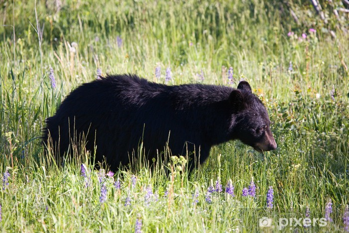 Carta da Parati in Vinile Black Bear - America