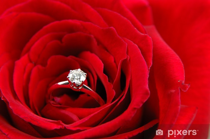 Fototapeta Zasnubni Prsten V Cervene Ruze Pixers Zijeme Pro Zmenu