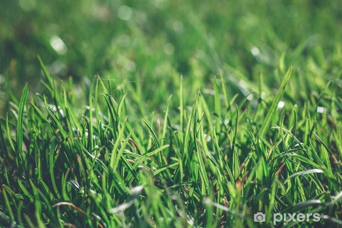 Green grass in a bright day dew close up macro Vinyl Wall Mural - Landscapes