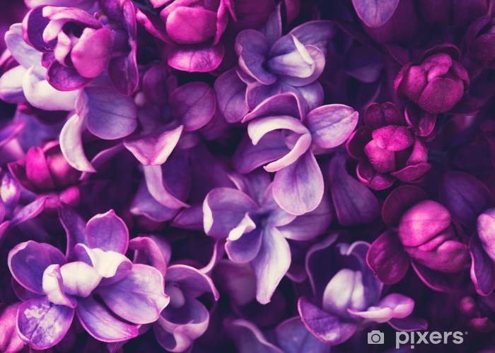 Vinilo Pixerstick Lila flores de fondo - Flores y plantas