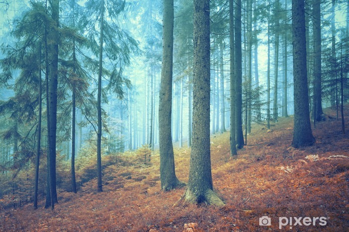 Beautiful dreamy conifer forest. Color filter effect used. Pixerstick Sticker - Landscapes