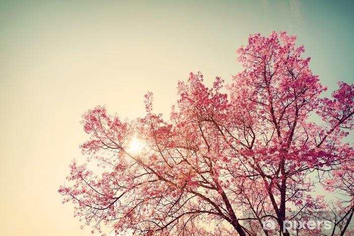 Papier Peint Vintage Fleur De Cerisier Fleur Sakura La Nature De