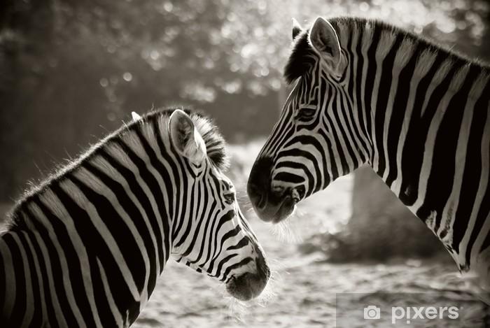 Naklejka Pixerstick Portret do Zebra, sepia spojrzenie - Tematy
