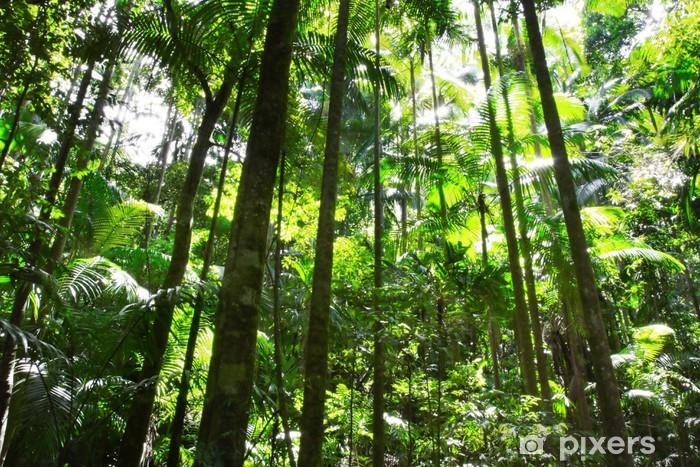 Rainforest Vinyl fototapet - Oceanien