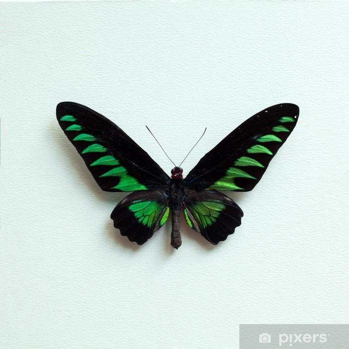 Tropisk sommerfugl Laptop Klistermærke - Dyr