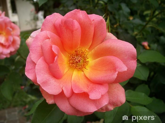 Fotomural Estándar Corail rosa - Flores