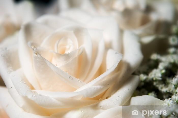 Carta Da Parati Rosa Bianca : Carta da parati singola rosa bianca con la rugiada a sinistra
