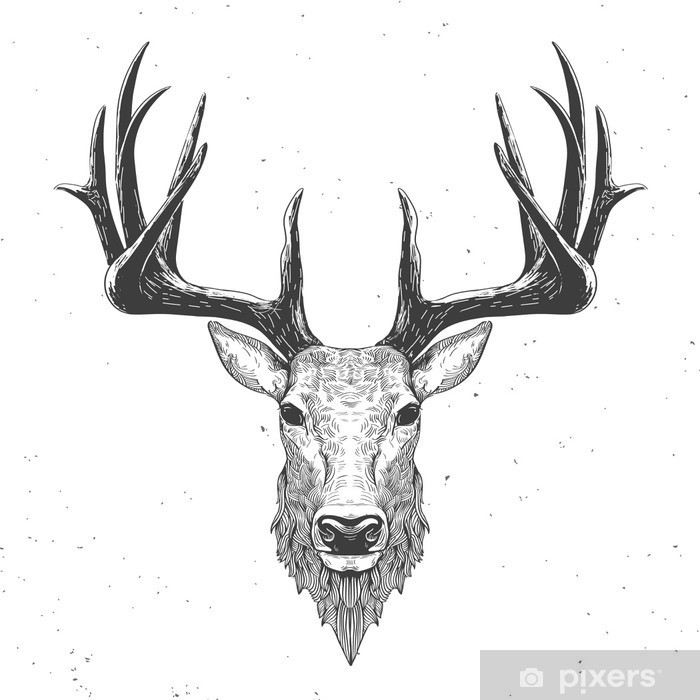Fototapeta winylowa Głowa jelenia na białym - Zwierzęta