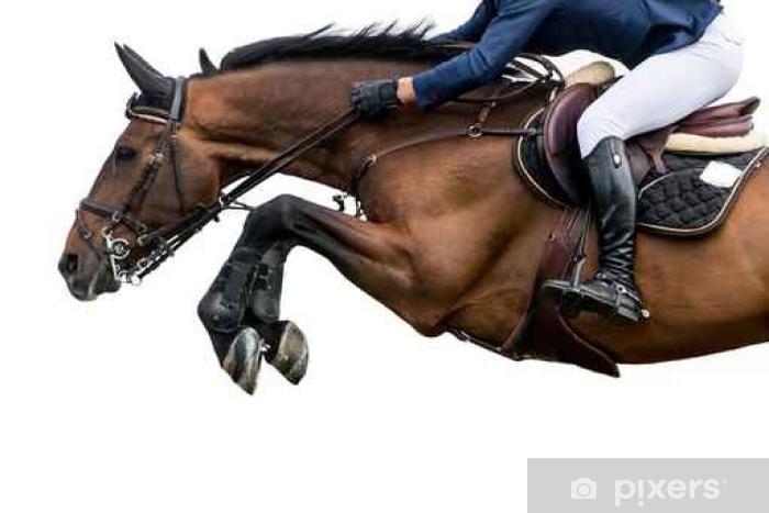 Mural de Parede em Vinil O salto do cavalo, Equestrian Sports, isolado no fundo branco - Desportos