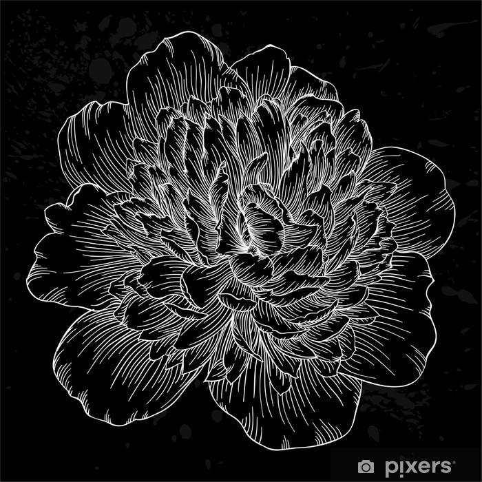 Sticker Pixerstick Belle fleur de pivoine noir et blanc isolé sur fond. lignes de contour et coups dessinée à la main. - Fleurs et plantes