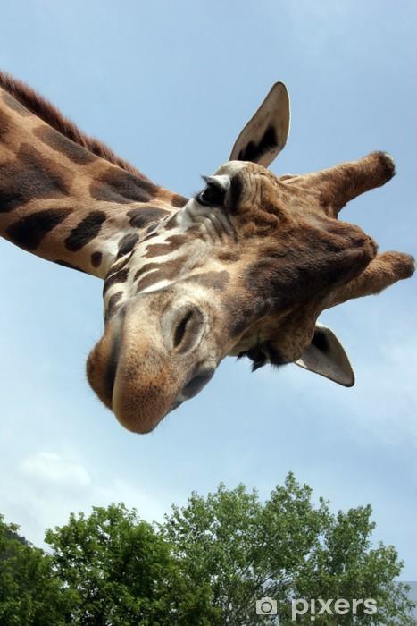 Papier Peint Autocollant Giraffa - Thèmes