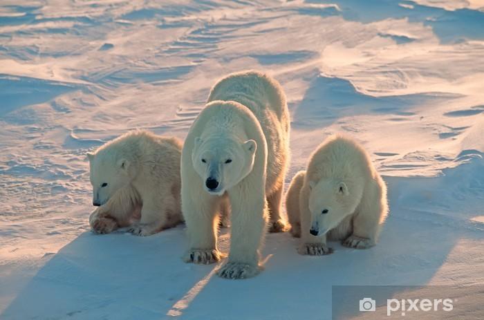 Carta da Parati in Vinile Gli orsi polari in Canada Artico - Temi