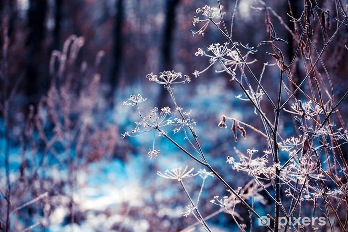 Papier peint vinyle Les plantes couvertes de givre - Plantes et fleurs