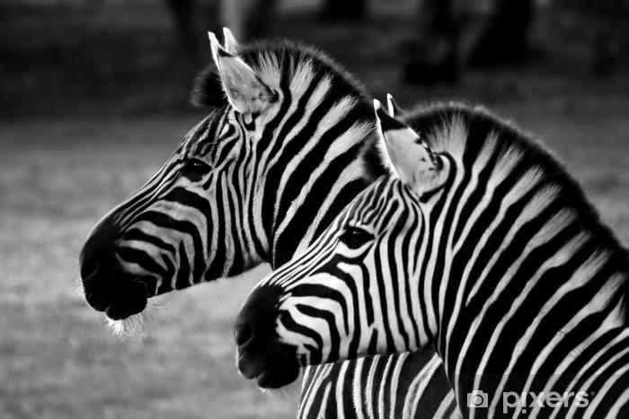 Fototapeta samoprzylepna Dwie zebry - Tematy