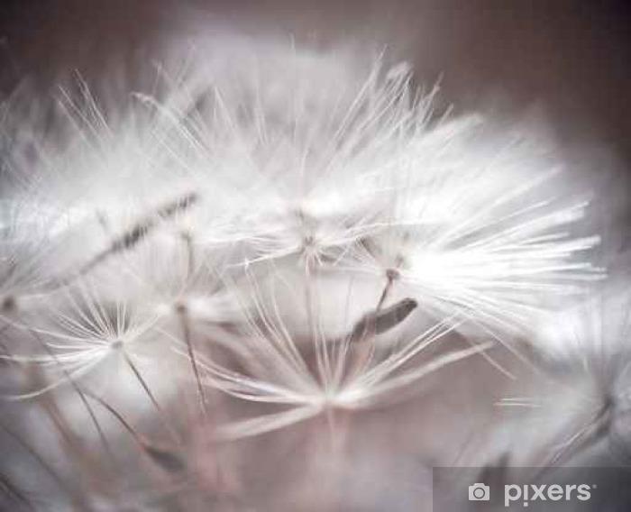 Fototapet av Vinyl Maskros abstrakt bakgrund. Grunt skärpedjup. - Växter och blommor