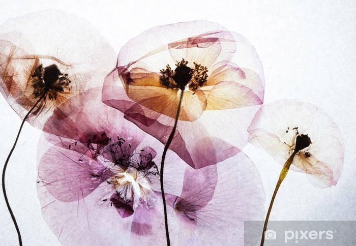 Papier peint vinyle Coquelicots sec - Plantes et fleurs