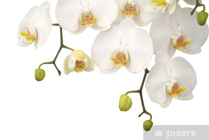 White orchid Pixerstick Sticker - Wall decals
