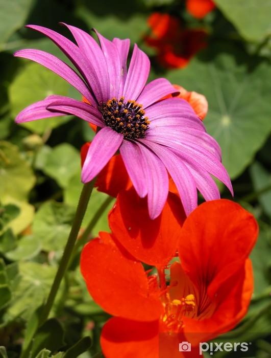 Naklejka Pixerstick Argyranthemum i kwiaty petunii - Kwiaty