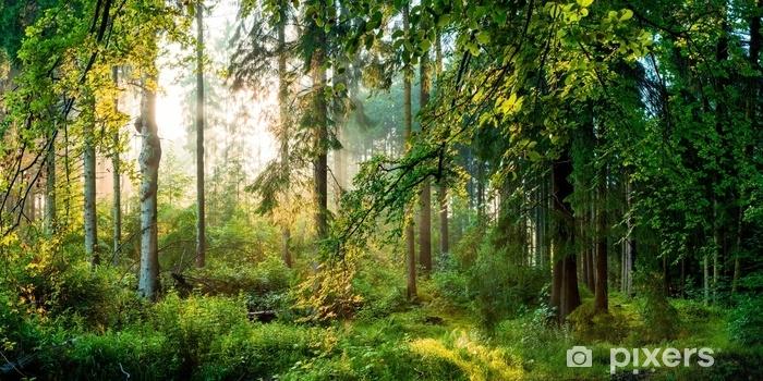 Vinyl Fotobehang Sonnenaufgang im Wald - Landschappen