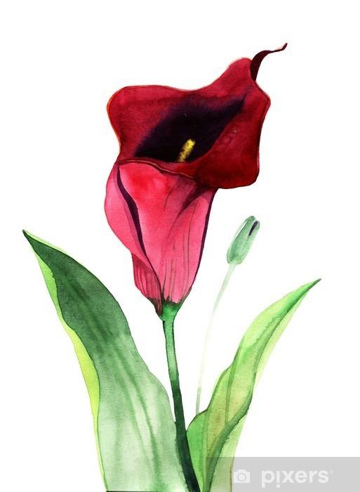 Fototapeta winylowa Calla Lily kwiaty, akwarela ilustracja - Rośliny i kwiaty
