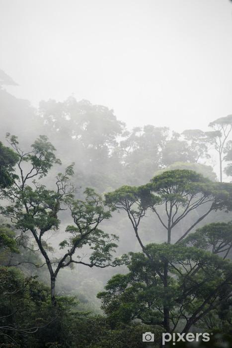 Fototapeta winylowa Mglisty las dżungla - Krajobrazy