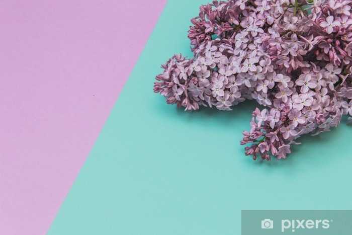 Flat lay stylish set: Lilac flowers on pastel background. Top view. Pixerstick Sticker - Plants and Flowers