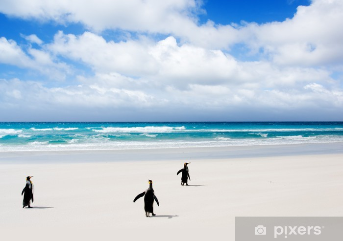 Vinyl-Fototapete King Penguins Überschrift zu dem Wasser - Urlaub