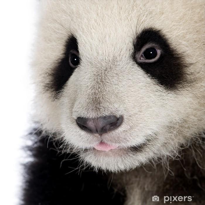 Fototapeta winylowa Panda (6 miesięcy) - ailuropoda melanoleuca - Tematy