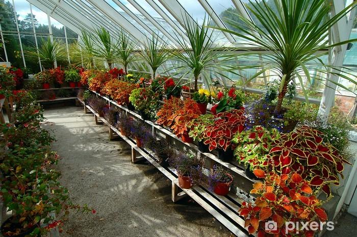 Papier peint vinyle Jardin botanique - Plantes