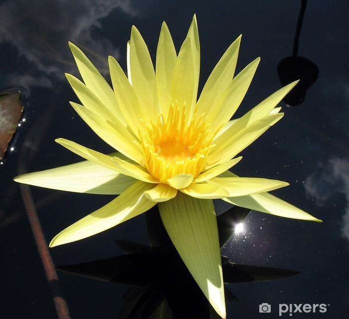 Vinyl-Fototapete Gelbe Seerose - Blumen