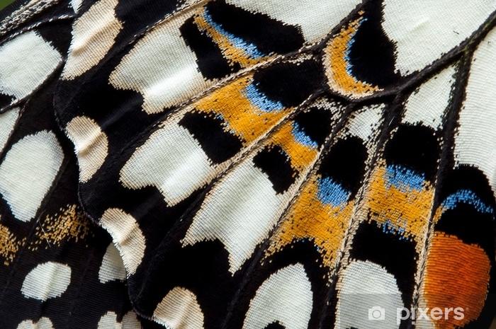 Naklejka Pixerstick Zbliżenie wapno motyl skrzydło, motyl skrzydło szczegół tekstura tło - Zasoby graficzne