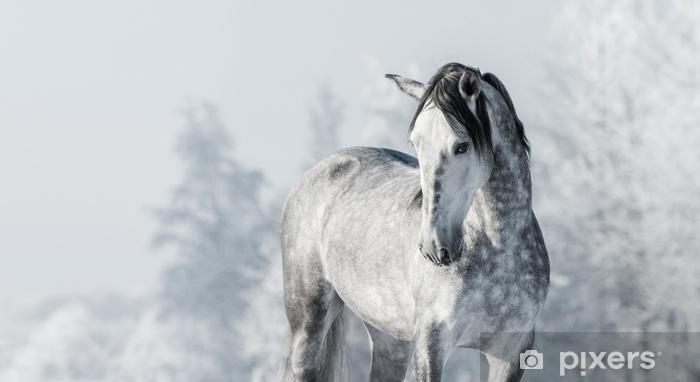 Vinyl Fotobehang Portret van Spaans volbloed grijs paard in de winterbos. - Dieren