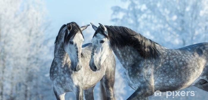 Fototapeta samoprzylepna Portret dwóch hiszpańskich szarych ogierów w zimowym lesie - Zwierzęta