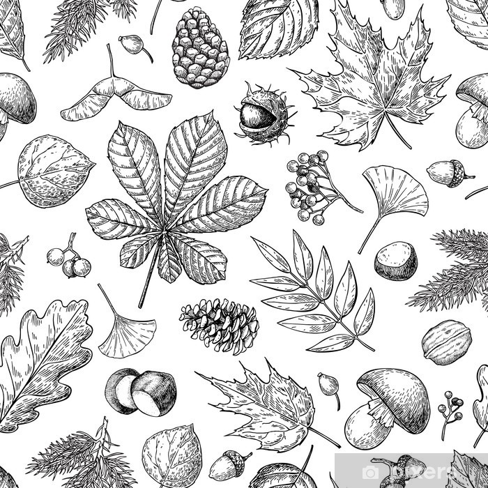Fototapeta samoprzylepna Jesień bez szwu wektor wzór z liści, jagód, szyszek jodły, - Rośliny i kwiaty