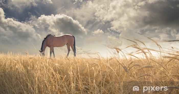 Hevosen laiduntaminen kentällä Vinyyli valokuvatapetti - Eläimet