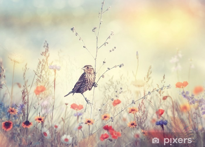 Vinilo Pixerstick El campo de flores silvestres y un pájaro - Plantas y flores