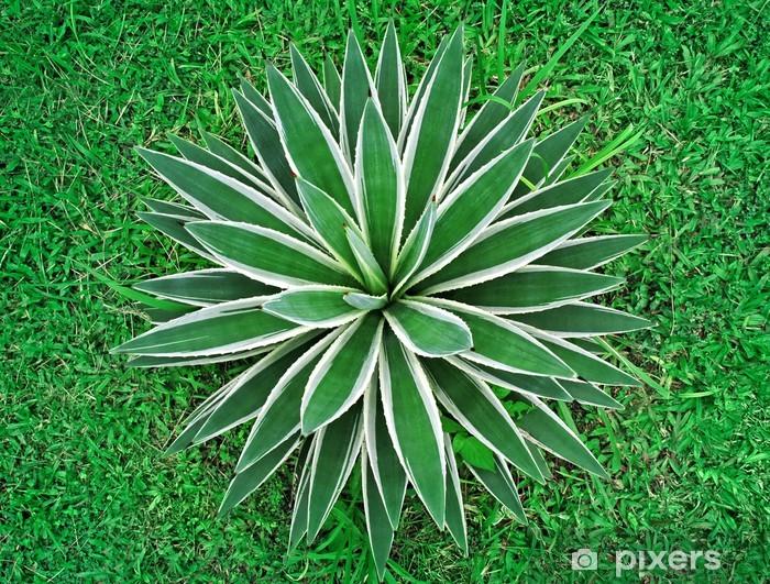 Vinyl-Fototapete Tropische Pflanze Draufsicht - Landwirtschaft
